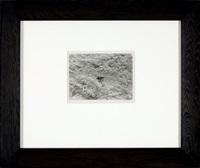 detroit, [leaf on snow] by harry callahan